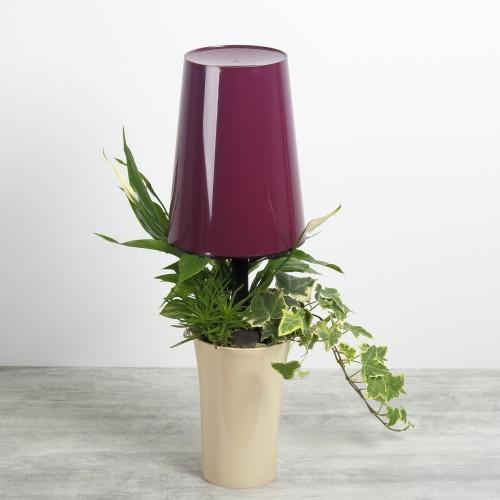Lampe végétale Prune/beige